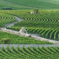 Отель Masseria Amastuola Wine Resort Криспьяно фото 2
