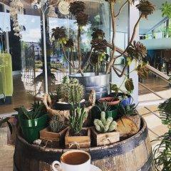 Отель Bedia Otel Мармара питание фото 3
