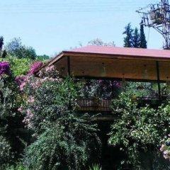 Eucalyptus Pension Турция, Патара - отзывы, цены и фото номеров - забронировать отель Eucalyptus Pension онлайн фото 7