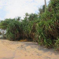 Отель Leatherback Beach Villa пляж фото 2