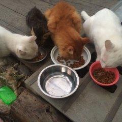 Tomarigi - Hostel Якусима с домашними животными