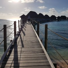 Отель Tikehau Pearl Beach Resort фото 4