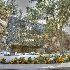 Отель Olive Farm Of Datca Guesthouse - Adults Only Датча фото 3