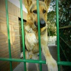 Hostel Prima Base с домашними животными