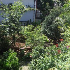 Tree House Hostel Далат фото 2