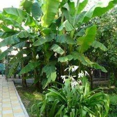 Отель Annushka Guest House Сочи фото 2