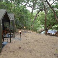Отель Mahoora Tented Safari Camp - Kumana Шри-Ланка, Яла - отзывы, цены и фото номеров - забронировать отель Mahoora Tented Safari Camp - Kumana онлайн фото 14