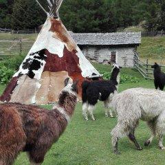 Отель Residence Sonneck Монклассико с домашними животными
