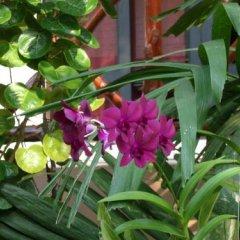 Отель tropical heaven's garden samui фото 3