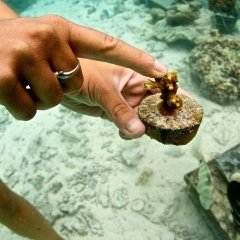 Отель Le Meridien Bora Bora спа