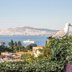L'isola Guesthouse Турция, Хейбелиада - отзывы, цены и фото номеров - забронировать отель L'isola Guesthouse - Adults Only онлайн пляж