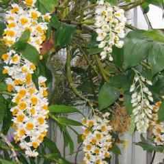 Отель Rice Flower Homestay