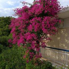 Отель Studios Marianna Греция, Эгина - отзывы, цены и фото номеров - забронировать отель Studios Marianna онлайн фото 12