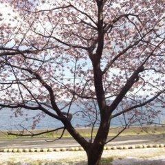 Отель Izukogen Onsen J Garden Ито пляж фото 2