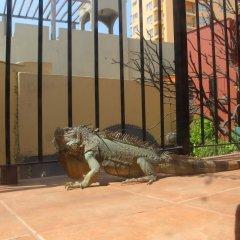 Casa de Leyendas Hotel -Adults Only с домашними животными