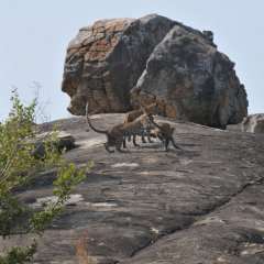 Отель Back of Beyond - Safari Lodge Yala фото 5