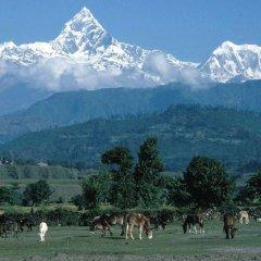Отель Pari Homestay Непал, Катманду - отзывы, цены и фото номеров - забронировать отель Pari Homestay онлайн