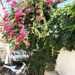 Отель Pizania Греция, Калимнос - отзывы, цены и фото номеров - забронировать отель Pizania онлайн фото 12