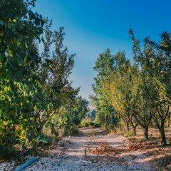 Отель Tur Sinai Organic Farm Resort Иерусалим фото 8