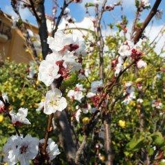 Отель Villa Olimpo Le Torri Агридженто фото 11