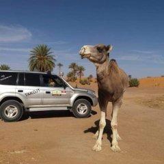 Отель Takojt Марокко, Мерзуга - отзывы, цены и фото номеров - забронировать отель Takojt онлайн с домашними животными