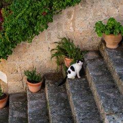 Отель Kokkini Porta Rossa Родос с домашними животными