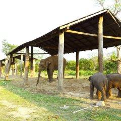 Отель Safari Adventure Lodge Непал, Саураха - отзывы, цены и фото номеров - забронировать отель Safari Adventure Lodge онлайн детские мероприятия