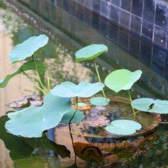 Отель Xige Garden Hotel Китай, Сямынь - отзывы, цены и фото номеров - забронировать отель Xige Garden Hotel онлайн бассейн