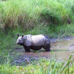 Отель Safari Adventure Lodge Непал, Саураха - отзывы, цены и фото номеров - забронировать отель Safari Adventure Lodge онлайн фитнесс-зал фото 3