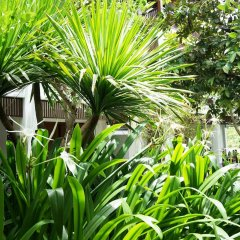 Отель Hoi An Chic фото 14