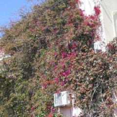 Отель Palladion Греция, Остров Санторини - отзывы, цены и фото номеров - забронировать отель Palladion онлайн фото 2