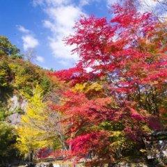 Отель Kurokawa-So Япония, Минамиогуни - отзывы, цены и фото номеров - забронировать отель Kurokawa-So онлайн фото 4