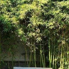 Отель Lu Song Yuan Китай, Пекин - отзывы, цены и фото номеров - забронировать отель Lu Song Yuan онлайн фото 11