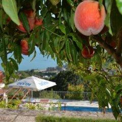 Отель Villa Puma Балчик приотельная территория фото 2