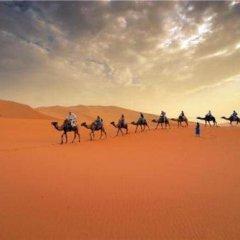 Отель Camp Under Stars - Adults Only Марокко, Мерзуга - отзывы, цены и фото номеров - забронировать отель Camp Under Stars - Adults Only онлайн бассейн