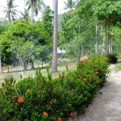 Отель Seashell Coconut Village Koh Tao фото 4