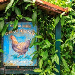 Отель Bed and breakfast I Glicini Кастаньето-Кардуччи с домашними животными