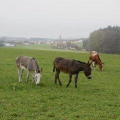 Отель Bauernhof Lenzenbauer с домашними животными