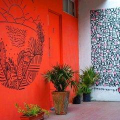 Отель Blue Pepper Hostel & Bar Мексика, Гвадалахара - отзывы, цены и фото номеров - забронировать отель Blue Pepper Hostel & Bar онлайн спа фото 2