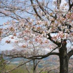 Отель Shiki no Mori Япония, Минамиогуни - отзывы, цены и фото номеров - забронировать отель Shiki no Mori онлайн приотельная территория