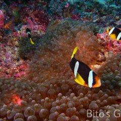 Отель Bitos GH Мальдивы, Северный атолл Мале - отзывы, цены и фото номеров - забронировать отель Bitos GH онлайн развлечения