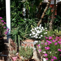 Отель Garden Fiorella Италия, Чинизи - отзывы, цены и фото номеров - забронировать отель Garden Fiorella онлайн фото 2