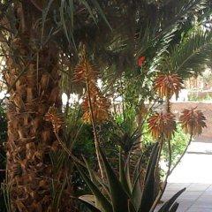 Отель Riad Amlal Марокко, Уарзазат - отзывы, цены и фото номеров - забронировать отель Riad Amlal онлайн фото 2