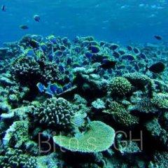 Отель Bitos GH Мальдивы, Северный атолл Мале - отзывы, цены и фото номеров - забронировать отель Bitos GH онлайн