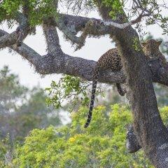 Отель Wild Trails Yala Tented Safari Camp By Yoho спортивное сооружение