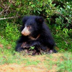 Отель Wild eco safari с домашними животными