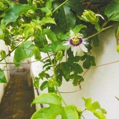 Отель Jungle Guest House Шри-Ланка, Галле - отзывы, цены и фото номеров - забронировать отель Jungle Guest House онлайн фото 6
