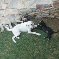 Sirince Klaseas Hotel & Restaurant Торбали с домашними животными