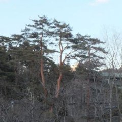 Hotel Seikoen Никко