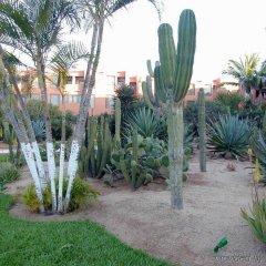 Отель Holiday Inn Resort Los Cabos Все включено с домашними животными